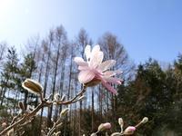 春の陽に輝く - 風路のこぶちさわ日記
