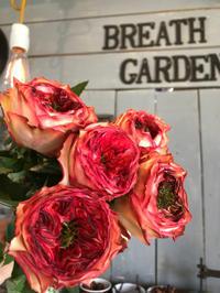 たくさん切花が入荷してきました(^-^) - ブレスガーデン Breath Garden 大阪・泉南のお花屋さんです。バルーンもはじめました。