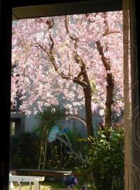 今日のお花 - うまこの天袋