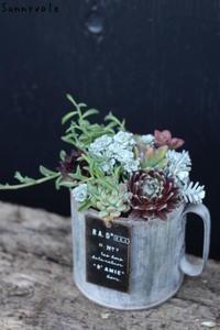 4月の多肉植物の会のお知らせ - さにべるスタッフblog     -Sunny Day's Garden-