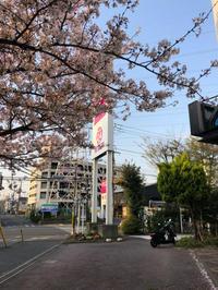 今日の桜(3月30日) - 魔王の独り言 ~MAOU is things one person.~
