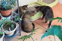 トイレに何かいるよ! - 猫と夕焼け