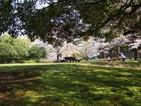 スナップ  シャボン玉  紅枝垂れ - エンジェルの画日記・音楽の散歩道