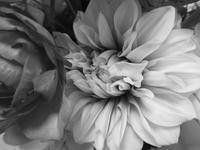 春のアレンジ  モノクロバージョン - グリママの花日記