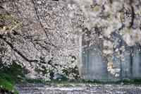 和光では今年最後の花見だな・・・ - デジカメ一眼レフ開眼への道