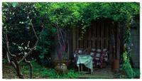 三月日記:春日 - 世話要らずの庭