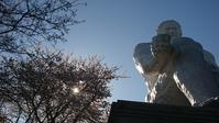 桜のお花見 in大串貝塚ふれあい公園 - のんびりタルトパイ日記