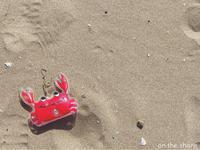 越前蟹 - on the shore