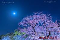 ライトアップの桜と月千鳥ヶ淵 - 風景写真家 鐘ヶ江道彦のフォトブログ