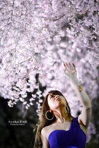 夜桜綾花 【藤 綾花】 - taka-c's ふぉとらいふ Season2