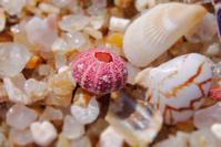 赤いコデマリ - Beachcomber's Logbook