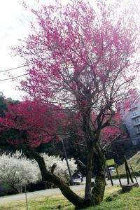 裏高尾梅街道を歩いて2 - はーとらんど写真感