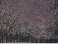 #1041 樹木公園 - 想い出cameraパートⅢ
