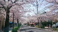 毎月1日はありますが特別感感じる4月♡ - bonton blog