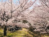 小豆島 城山のさくら - やわらかな風の吹く場所に:母乳育児を応援
