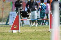 JKC九州ブロックアジ競技会 2018/03/11 #6 - ON THE 道路