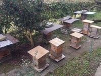 '18 春風家の養蜂準備 - 雨 ときどき 晴れ