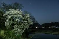 G1XMarkⅢで夜桜を撮る - 田舎もんの電脳撮影日記