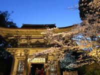 三井寺、桜のライトアップ。 - 今日も笑顔で。。