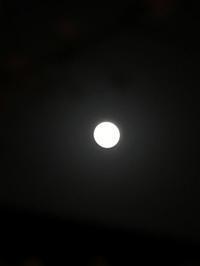 ほんのり月灯りの元「夜桜見物+美味しい宴会」編 - 岡山の実家・持家・空き家&中古の家をリノベする。