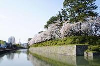 桜→藤 - 日々綴り