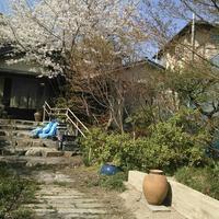 現場の桜も満開‼版築... - 庭師ののんびり紀行