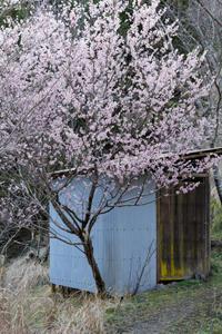 春近し ~西吉野 - katsuのヘタッピ風景