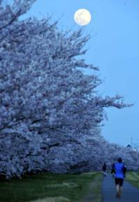 多摩川・満月と桜 - 萩原義弘のすかぶら写真日記