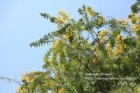 春の風に流されて - mango shower