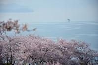 正福寺山の桜 - できる限り心をこめて・・Ⅲ