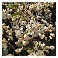 Las primeras flores - Gardener*s Diary