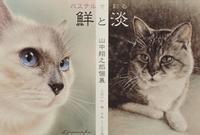作家さん個展のご案内~山中翔之郎さん~ - 湘南藤沢 猫ものの店と小さなギャラリー  山猫屋