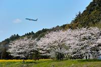 里山の春 - WiNGSCAPE