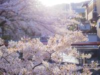 京都春さんぽ〜心まで春色に染まる〜 - Photographie de la couleur