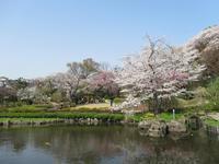 鶴見区の桜を堪能する旅 ~その3~ - 神奈川徒歩々旅
