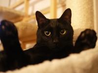 お誕生日猫 ぎゃぉす5歳編。 - ゆきねこ猫家族