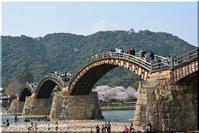 錦帯橋でも満開 - 北海道photo一撮り旅