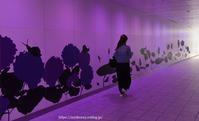 purple - Noriko's Photo  -light & shadow-
