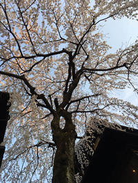 """子どもの人生の節目~感謝!感謝!in京都 - 西薗守の""""子育て"""""""
