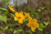 権現山にお花見 - あだっちゃんの花鳥風月