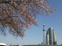 隅田公園にて 2018/03/31 - いつの間にか20年