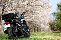桜巡り - 下手の横好き道具好き