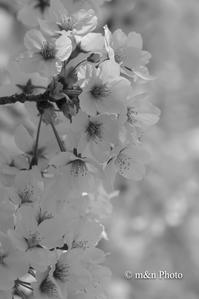 春のひととき - 季節のおくりもの