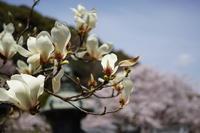 「三顧の礼 -山崎聖天観音寺-」 - ほぼ京都人の密やかな眺め