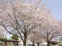エレファントカシマシさいたまスーパーアリーナ♪ - Shinsei Cafe 株式会社新聖都市開発 社長のブログ