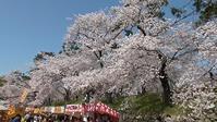 桜まつり #453 - 「 K 」 Diary