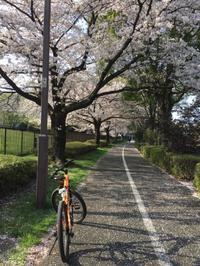 桜とエリーゼ - White Summer