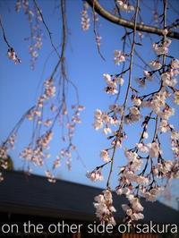 桜を見ては貴方を想いだす… - serendipity blog