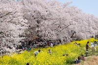 180331 熊谷桜堤まで遠征 - そら いろ  うみ いろ
