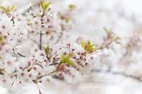 4月の営業カレンダーと営業時間変更のお知らせ - maison de fanfare